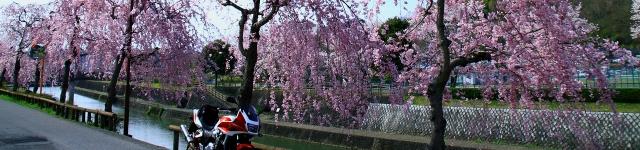 20100424Motegi_sakura